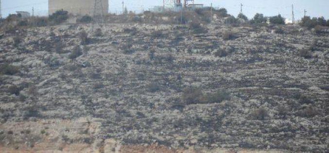 """مستعمرو """" الكانا"""" يحرقون 140 شجرة زيتون في بلدة الزاوية / محافظة  سلفيت"""