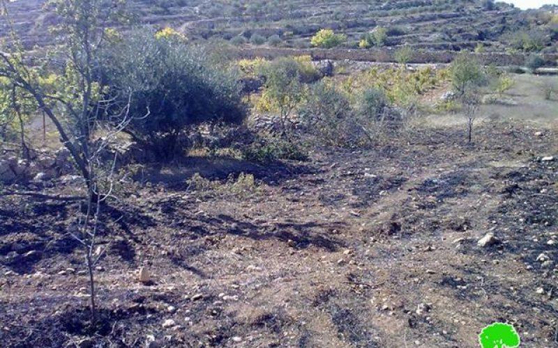 حرق 90 شجرة من اللوزيات و الزيتون  في منطقة واد لبيار في قرية الخضر / محافظة بيت لحم