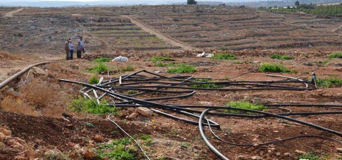 Ravaging eight agricultural dunums in Ras Atiya