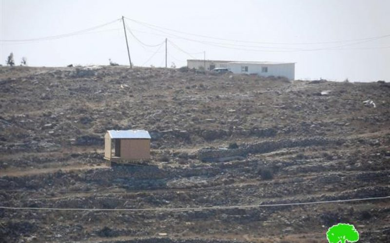 الاعتداء على 60 شجرة زيتون في جبل جالس- مدينة الخليل