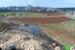Colony of Meirav pumps sewage into Jalbun lands