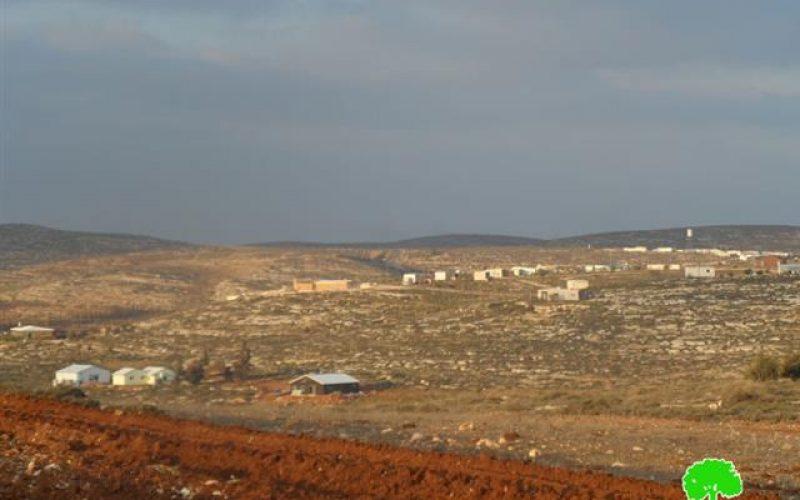 """مستعمرو """"عادي عاد"""" يتلفون 560 غرسة زيتون في بلدة ترمسعيا /محافظة رام الله"""