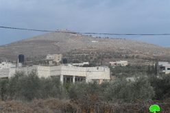 Damaging 34 olive trees in Ainabos