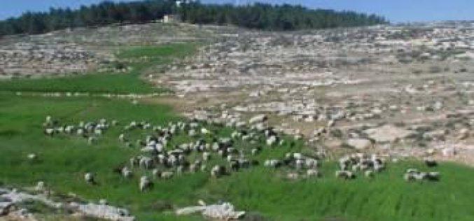 مستعمرون يحطمون ألواح شمسية ويعتدون على أراضي المواطنين في بير العد شرق يطا