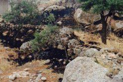 الاحتلال الإسرائيلي يتسبب في إحراق 11 شجرة لوزيات في قرية المغير