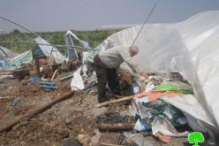 The Israeli occupation destroys stalls in the Jordan Valley