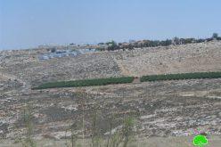 إحراق دونم مزروع بالقمح في قرية دير جرير / محافظة رام الله