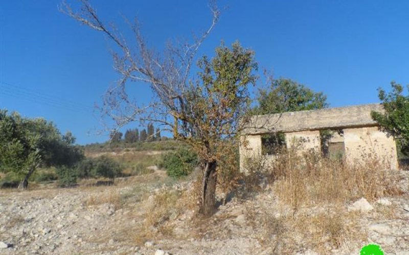 A field torched  and trees burn down in al-Naqura village – Nablus governorate