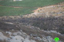 """مستعمرو مستعمرة """" براخا"""" يتسببون في إحراق العشرات من أشجار الزيتون في قرية عراق بورين"""