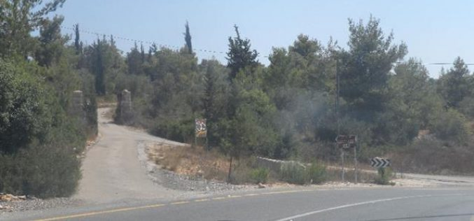 مخطط إسرائيلي لتهويد أحراش قرية أم صفا لصالح توسعة مستعمرة حلميش