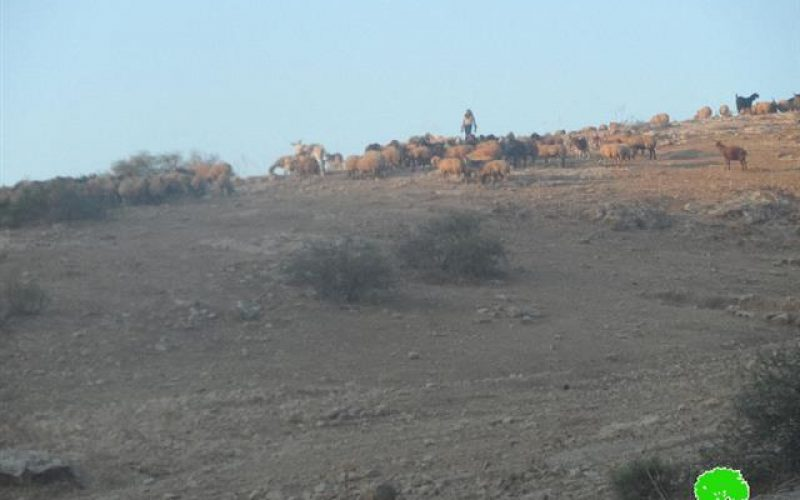 The Israeli occupation stops a reclamation on pools and water cisterns