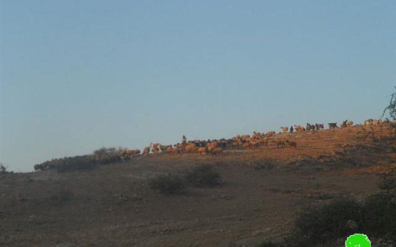 الاحتلال الإسرائيلي يفرض قيوداً تعجيزية على مربي الأغنام في الأغوار الشمالية