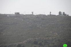 Damaging 68 fruitful olive trees in Yasuf