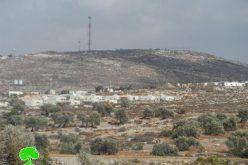الاعتداء على مواطنين في بلدة كفر اللبد وسرقة عدد زراعية وثمار الزيتون