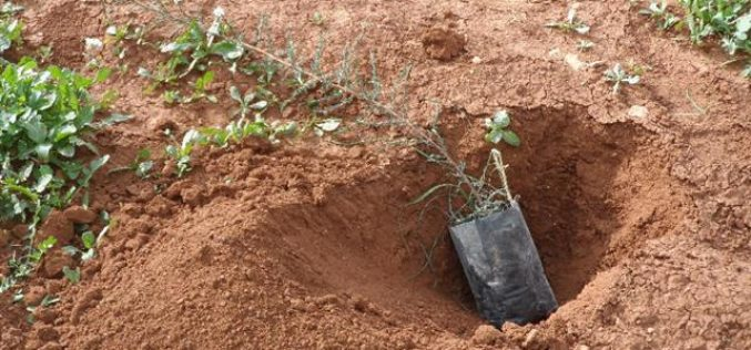 منع أهالي البقيعة من زراعة الغراس في حديقة الشهيد زياد ابو عين شرق سهل البقيعة
