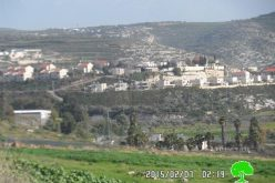 Killing 8 aging trees in Kfar Qadum through injecting them with toxic chemicals