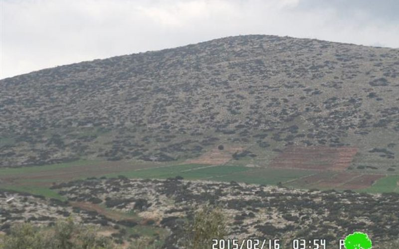 Israel Nature Authority notifies 210 olive seedlings with uprooting