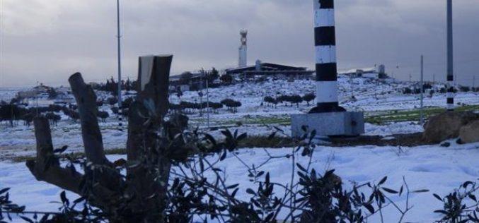 مستعمرون يقطعون 36 شجرة زيتون معمرة في أراضي بلدة يطا
