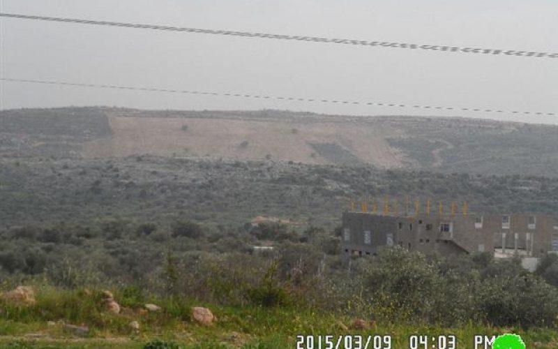 إعدام 56 غرسه زيتون بدم بارد في منطقة ظهر صبح جنوب بلدة بديا / محافظة سلفيت
