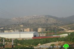 تحت ذريعة حماية الطبيعة ؟!!! تجريف 300 غرسة زيتون في قرية سالم