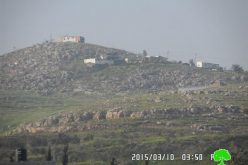 Givat Ronen colonists sabotage 35 olive trees in Nablus