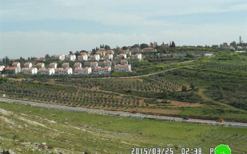 """مستعمرو مستعمرة """" حلميش"""" يتلفون 20 غرسة زيتون وتين في قرية دير نظام"""