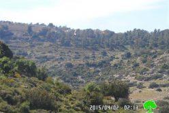 في ظل الاستهداف المتواصل لواد قانا, الاحتلال الإسرائيلي يقتلع ما يزيد عن 100 غرسة زيتون في منطقة واد قانا