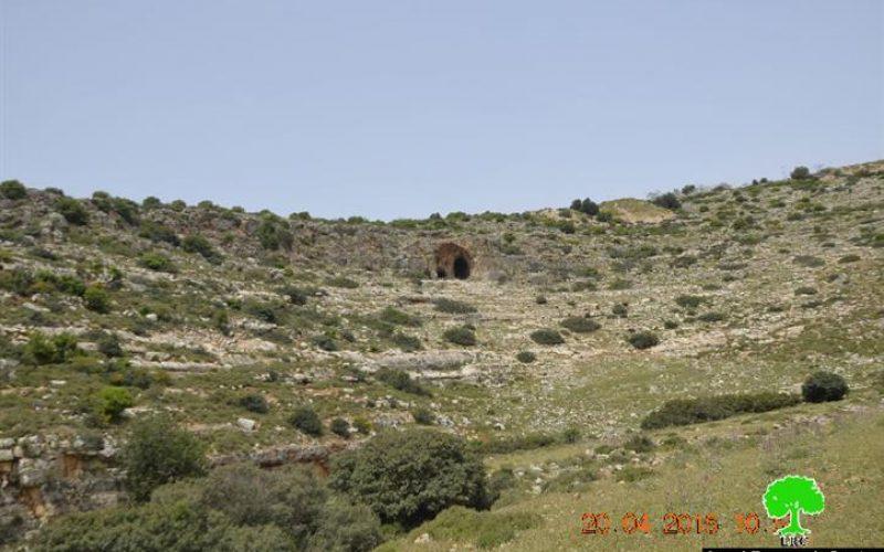 Uprooting and looting 520 olive saplings in the Salfit village of Deir Istiya