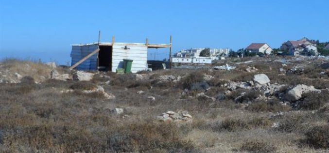 Colonists' attack on an agricultural land in the Hebron village of Halhul