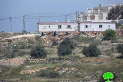 Colonist sabotage 85 grapes seedlings in the Hebron town of Halhul