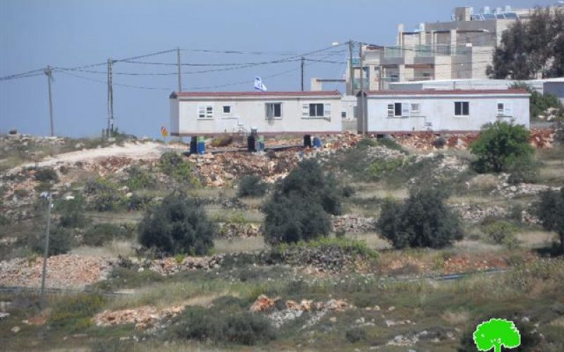 مستعمرون يقطعون 85 شتلة عنب في مدينة حلحول / محافظة الخليل