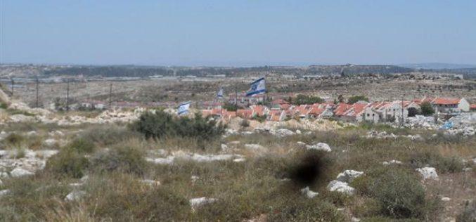 Avni Hefetz colonists take over lands from the Tulkarm village of Izbet Shofa