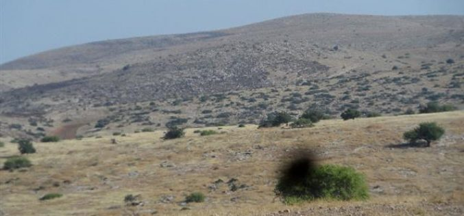 Setting hundreds of pastoral dunums alight in Wad al-Malih