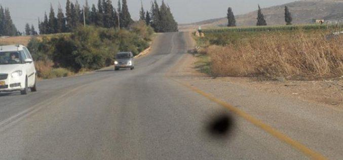 هدم 4 بسطات لبيع الخضار وتدمير شبكة ري في قرية الزبيدات