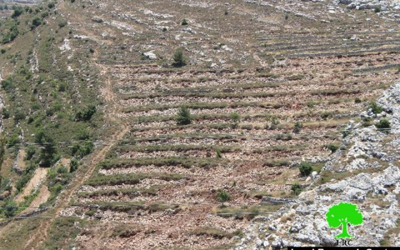 Ravaging 15 agricultural dunums from the Bethlehem village of Husan