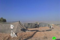The Israeli occupation delivers demolition notices on structures in the Jericho village of Fasayil