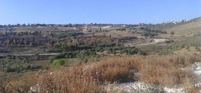 مستعمرون يتسببون في إحراق عشرات أشجار الزيتون خلف الجدار العنصري في قرية كفر صور