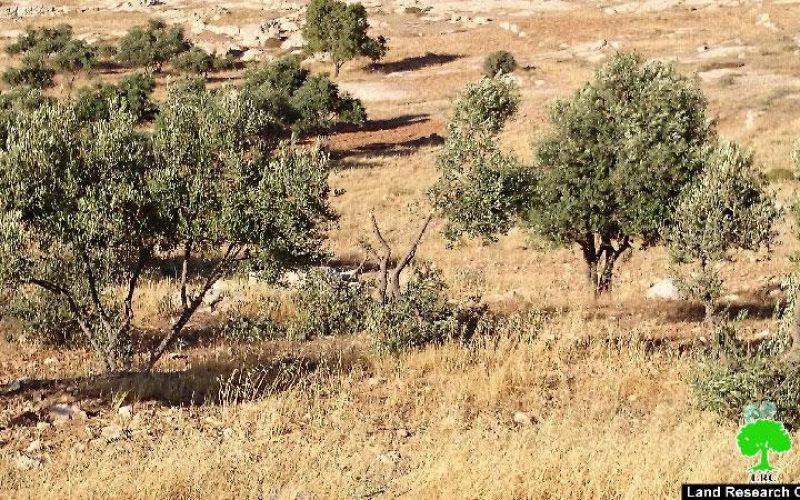 مستعمرون يعتدون على اراضي المواطنين في خربة سوسيا