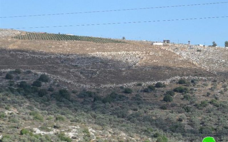 Tapuah colonists damage 38 fruitful olive trees in the Nablus town of Jamma'in