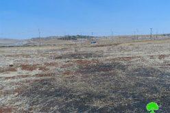 إحراق ما لا يقل عن 15 طن من محصول القمح على يد مستعمرين متطرفين في قرية الطيبة