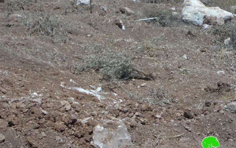 تجريف أراضي واقتلاع أشجار زيتون ومصادرتها في بلدة بيت أولا / محافظة الخليل