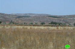 """مستعمرو """" عادي عاد"""" يعدمون 150 غرسة زيتون في بلدة ترمسعيا"""