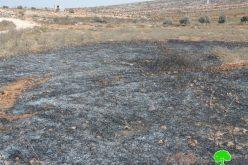إحراق حقول للشعير وأشجار زيتون معمرة في الريف الجنوبي من مدينة نابلس