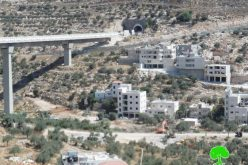 The Israeli occupation army ravages and uproots olive trees in Bethlehem governorate