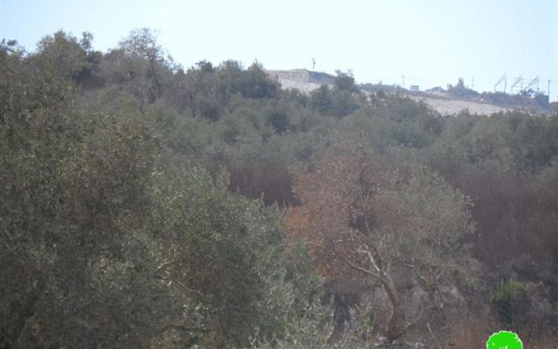 Yizhar colonist torch nine olive trees in the Nablus village of Burin