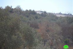 """مستعمرو مستعمرة """" يتسهار"""" يحرقون 9 اشجار زيتون في قرية بورين"""