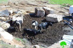 الاحتلال يهدم منشآت زراعية وبئر مياه شرق الخليل
