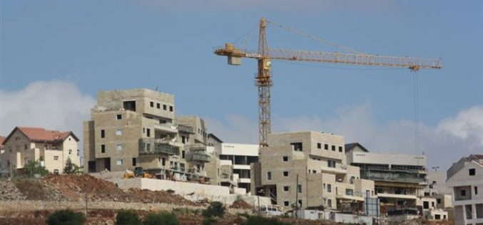 """Declared as State Land"" The Israeli Authorities expropriated 30 Dunums in Deir Istya & Jinsafut"