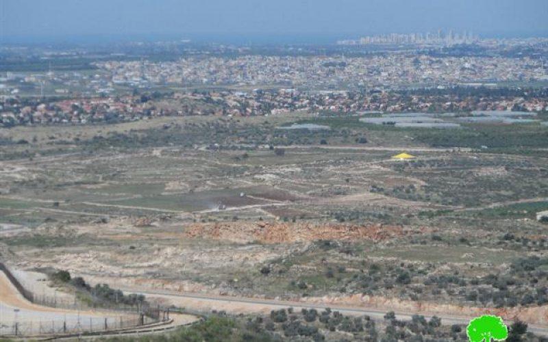 إتلاف وسرقة 150 غرسة حمضيات في قرية جيوس