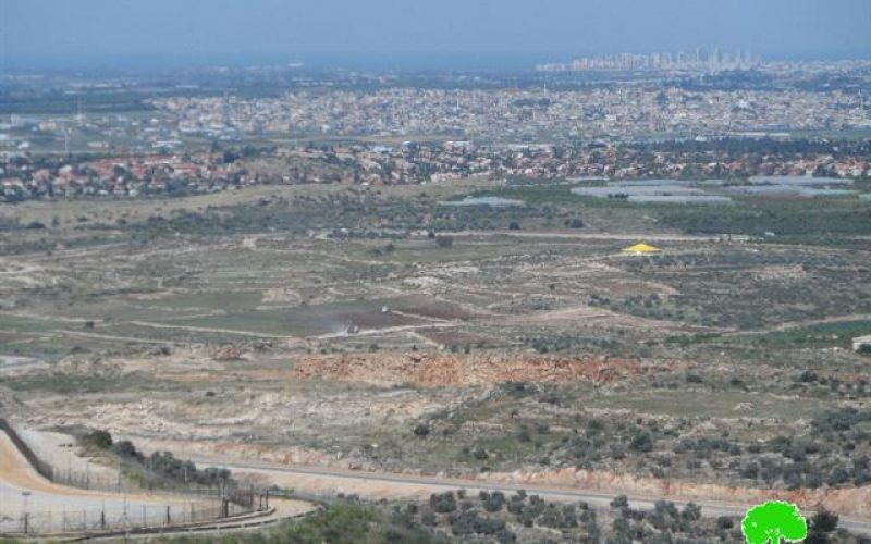 Israeli Occupation Forces steal 150 citrus seedling in Jayyous village